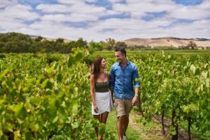 Walking through the vineyard in the Barossa
